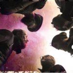 Soul Kamikaze ci raccontano traccia dopo traccia il debut album Dancing Trees